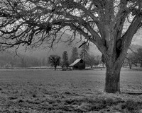 #182C - SCOTT VALLEY OAK #9 - HDR BLK-WHI (1:1.25)