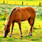 #216 - BIG SPRINGS HORSE - TS (1:1.25)