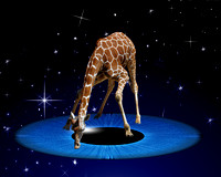 GIRAFFES - Artistic presentations of amazing creatures